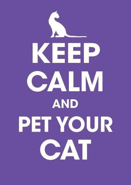 Mantén la calma y acaricia a tu gato =^.^=